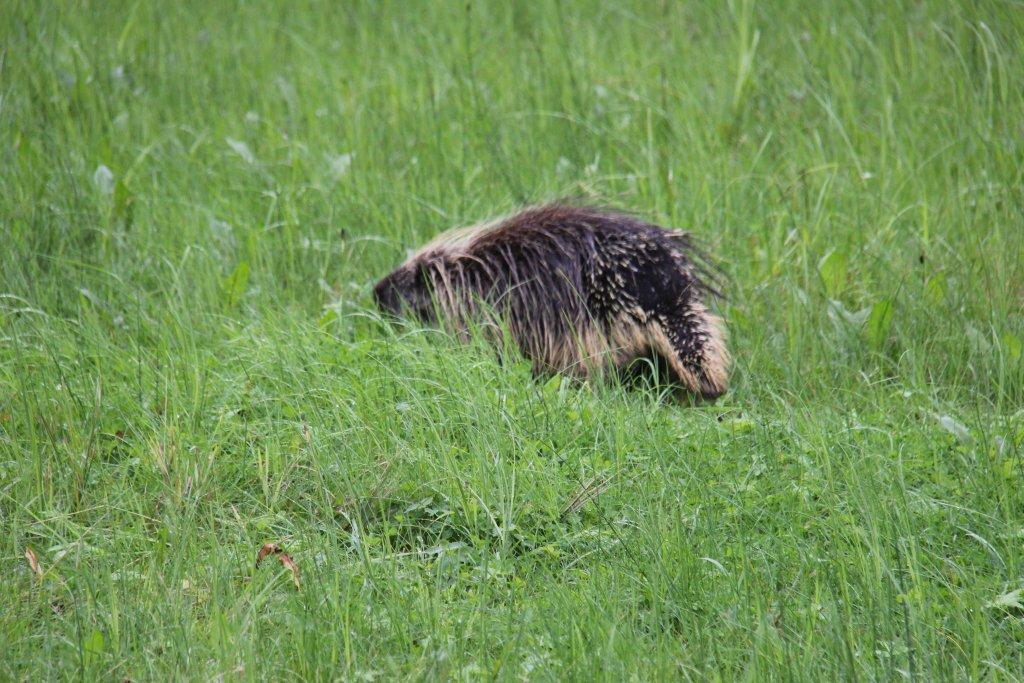 The Springmans blog - Alaska